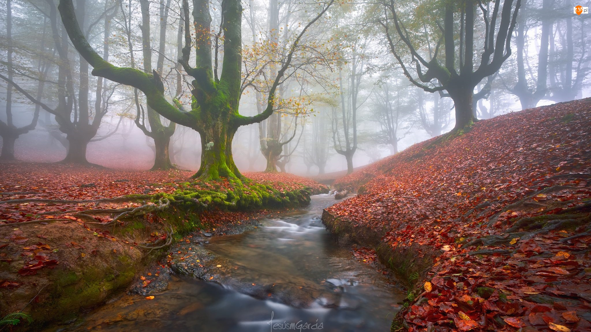 Mgła, Liście, Rzeczka, Las, Kraj Basków, Strumyk, Opadłe, Hiszpania, Drzewa, Park Narodowy Gorbea, Jesień