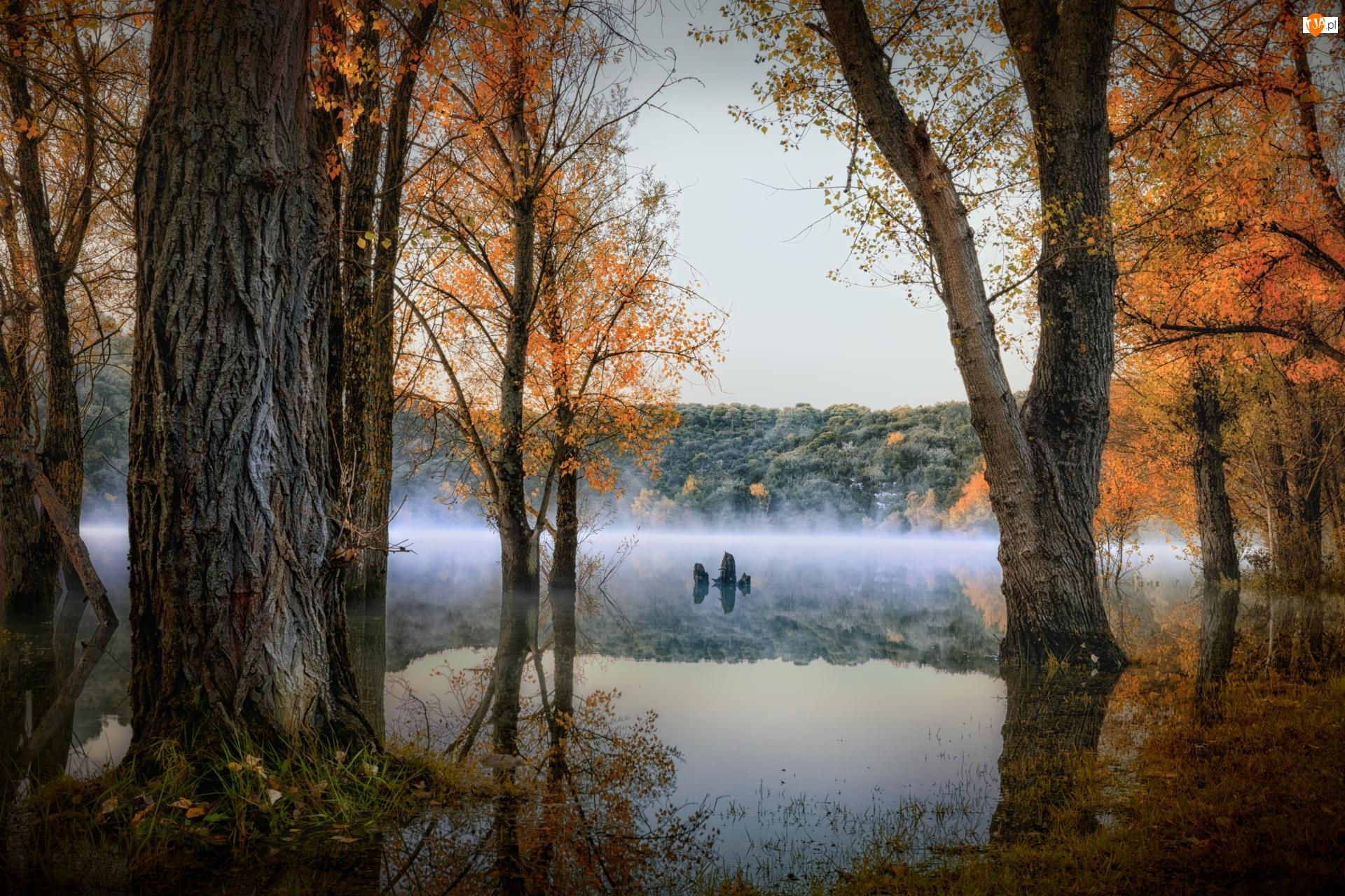 Mgła, Jesień, Jezioro, Las, Drzewa
