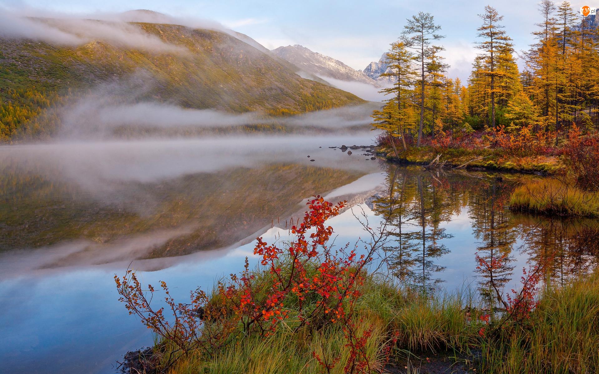 Mgła, Krzewy, Trawa, Liście, Jesień, Góry, Drzewa, Lasy, Kolorowe, Jezioro