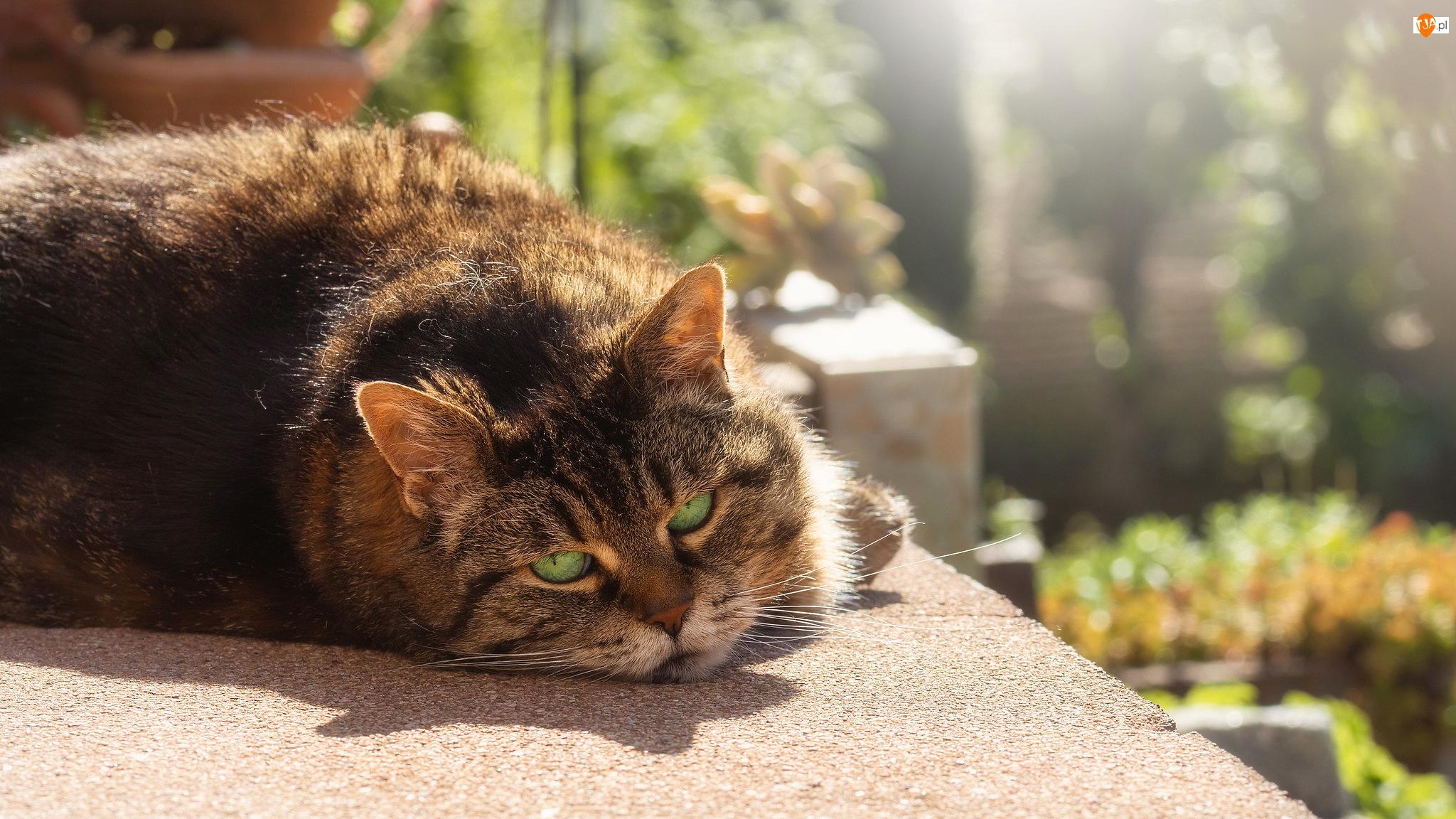 Słońce, Bury, Kot, Murek