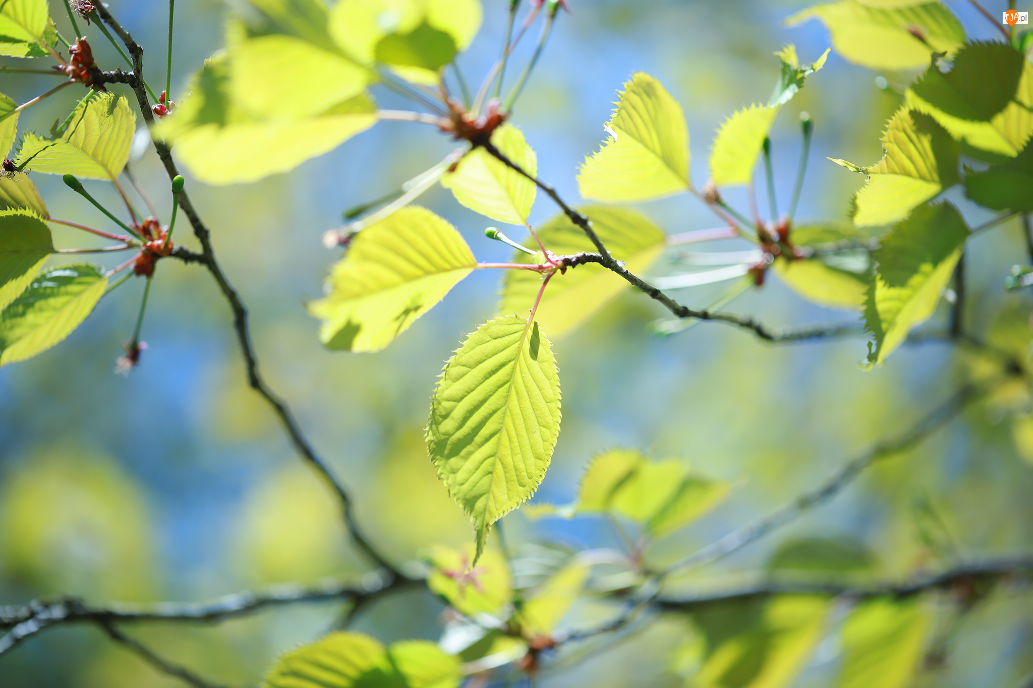 Gałązki, Rozświetlone, Zielone, Liście
