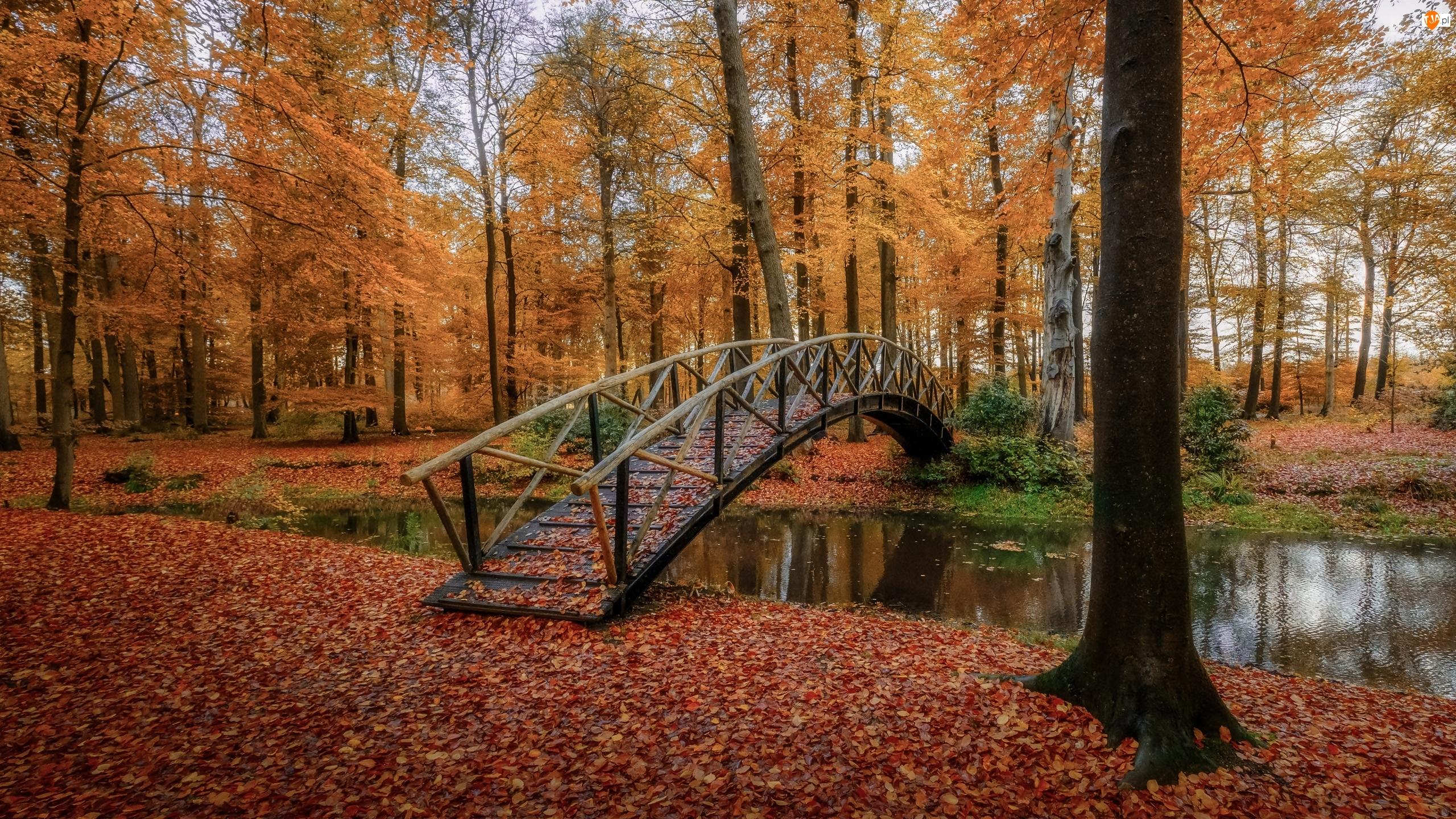 Rzeczka, Park, Drzewa, Jesień, Mostek, Liście