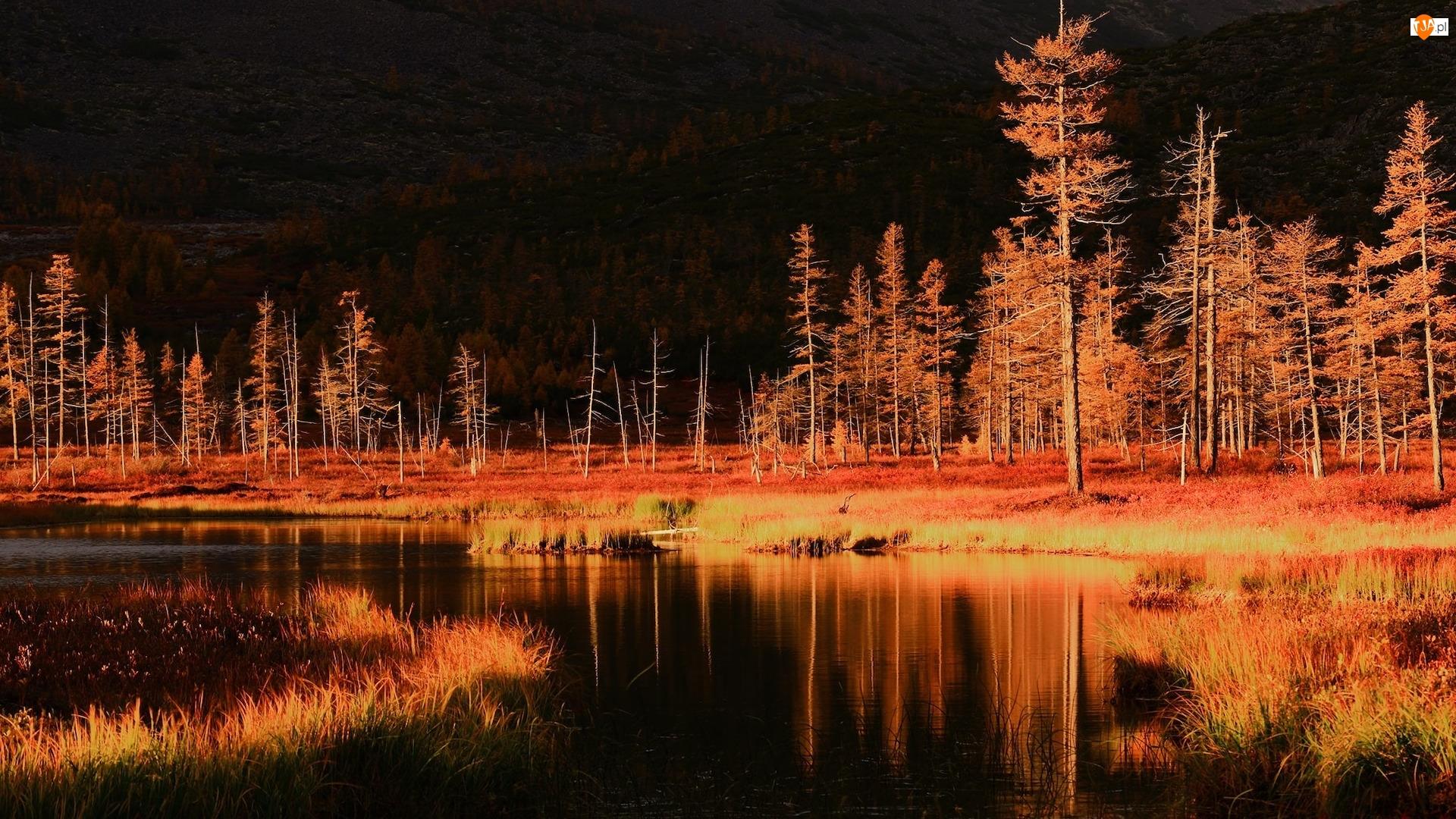 Drzewa, Odbicie, Pożółkłe, Jesień, Jezioro