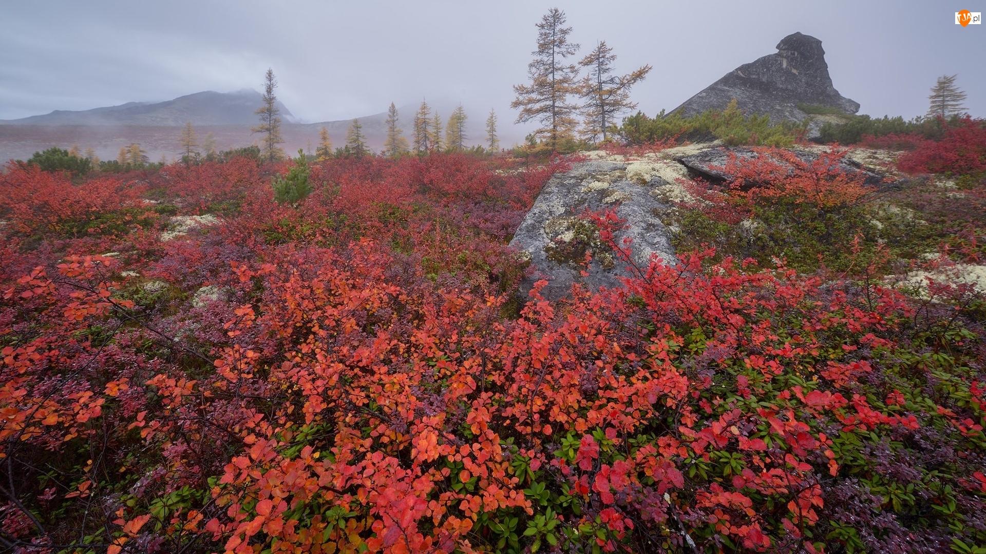 Skały, Jesień, Krzewy, Rośliny, Mgła, Czerwone