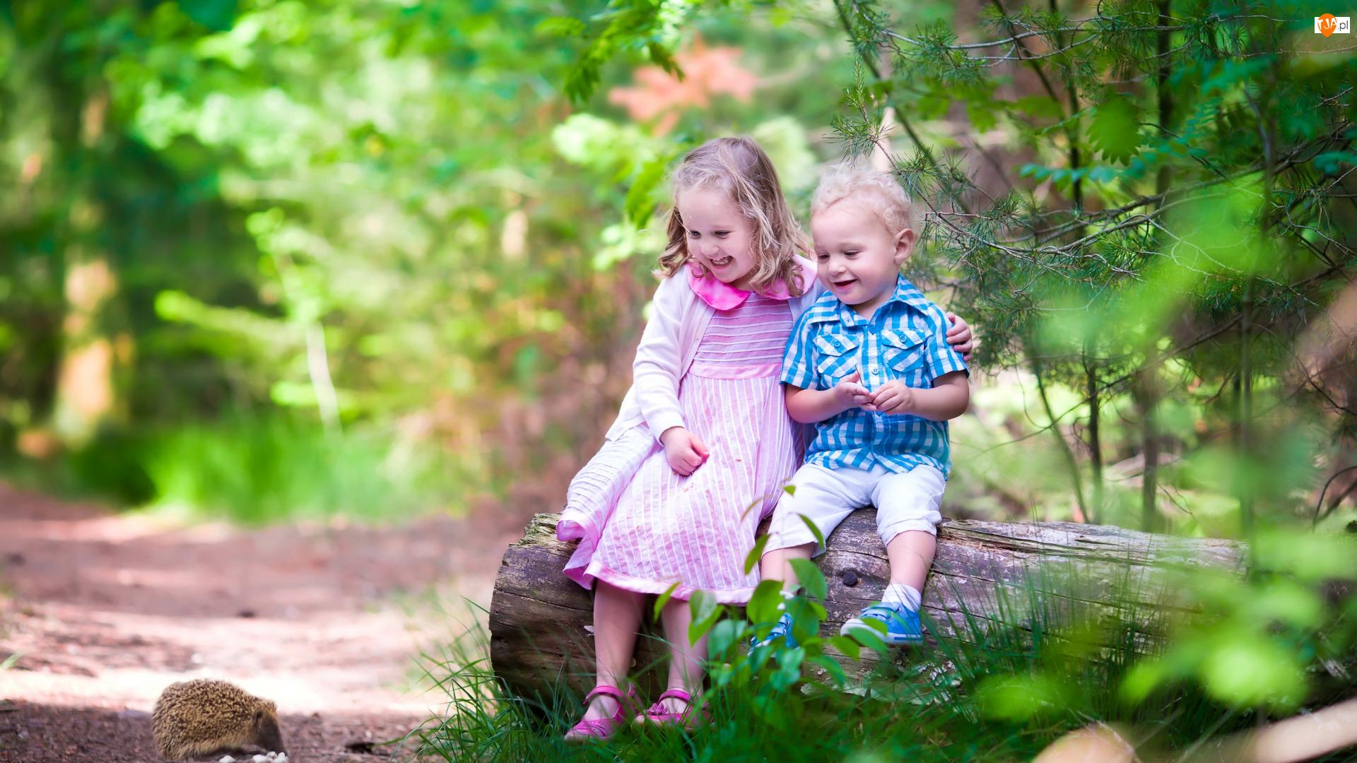 Dziewczynka, Dzieci, Uśmiech, Jeż, Chłopiec, Las