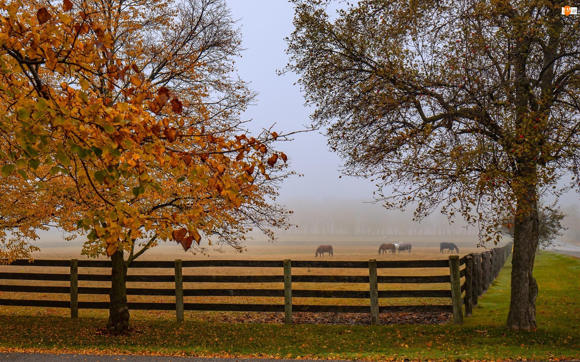 Drzewa, Jesień, Pastwisko, Mgła, Ogrodzenie, Konie
