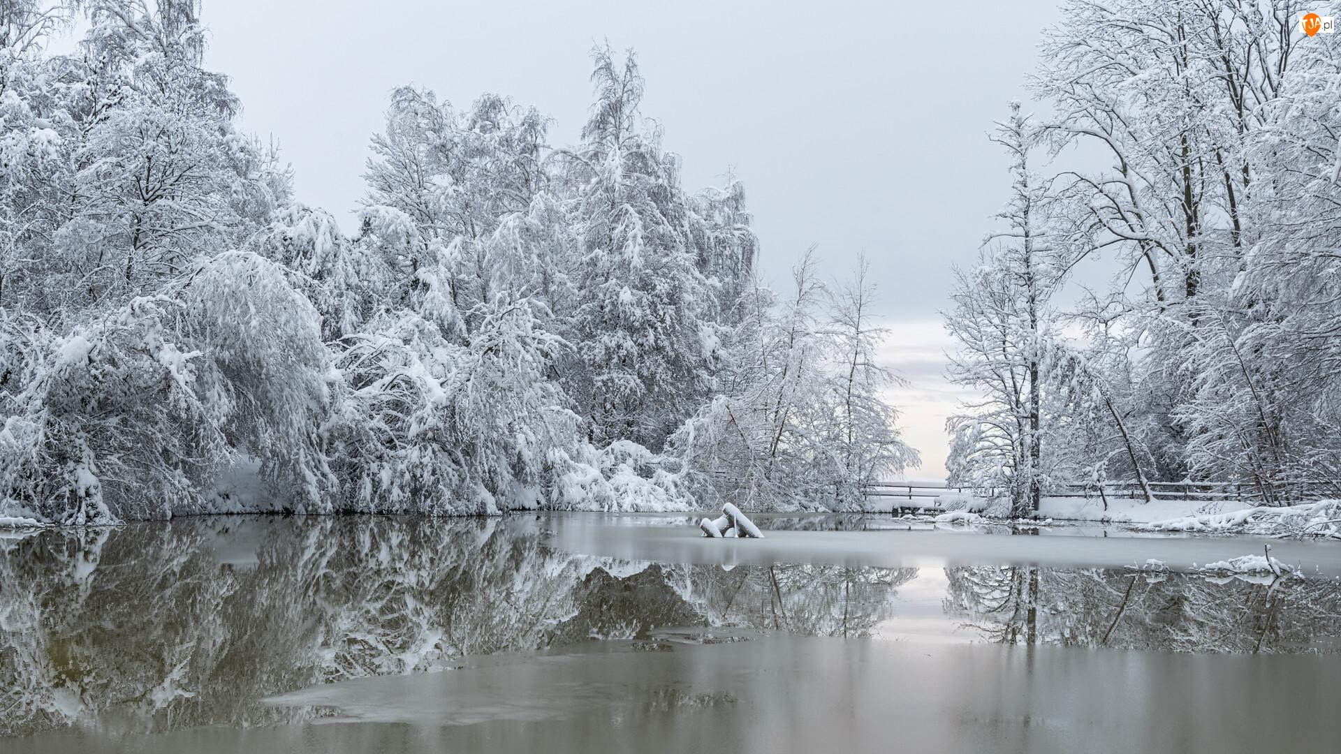 Ośnieżone, Las, Rzeka, Zima, Drzewa