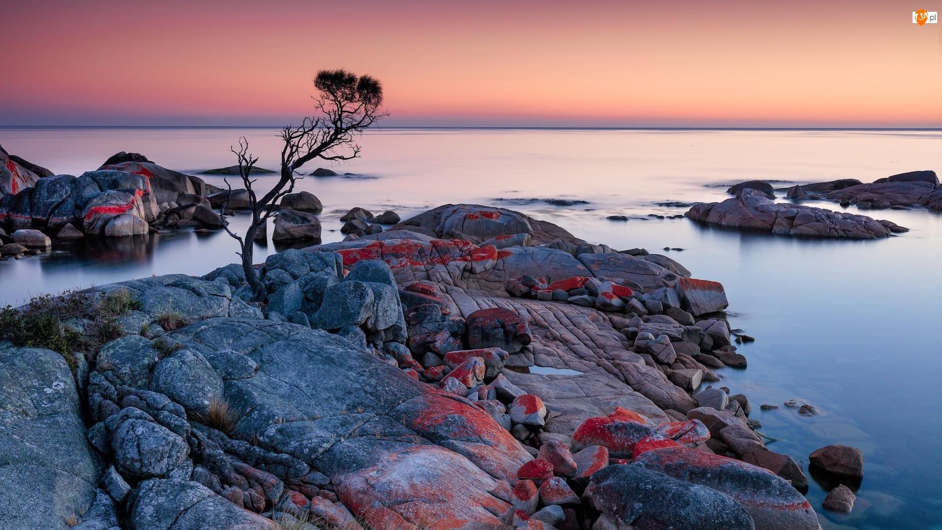 Tasmania, Binalong Bay, Drzewo, Australia, Głazy, Skały, Morze