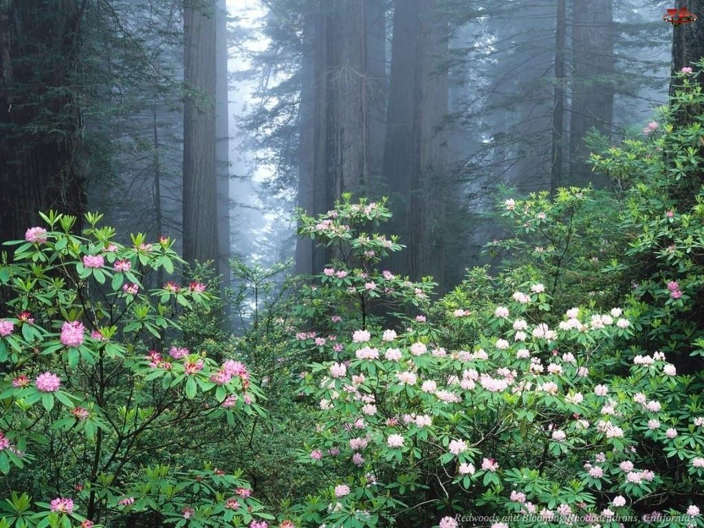 Las, Kwiatki