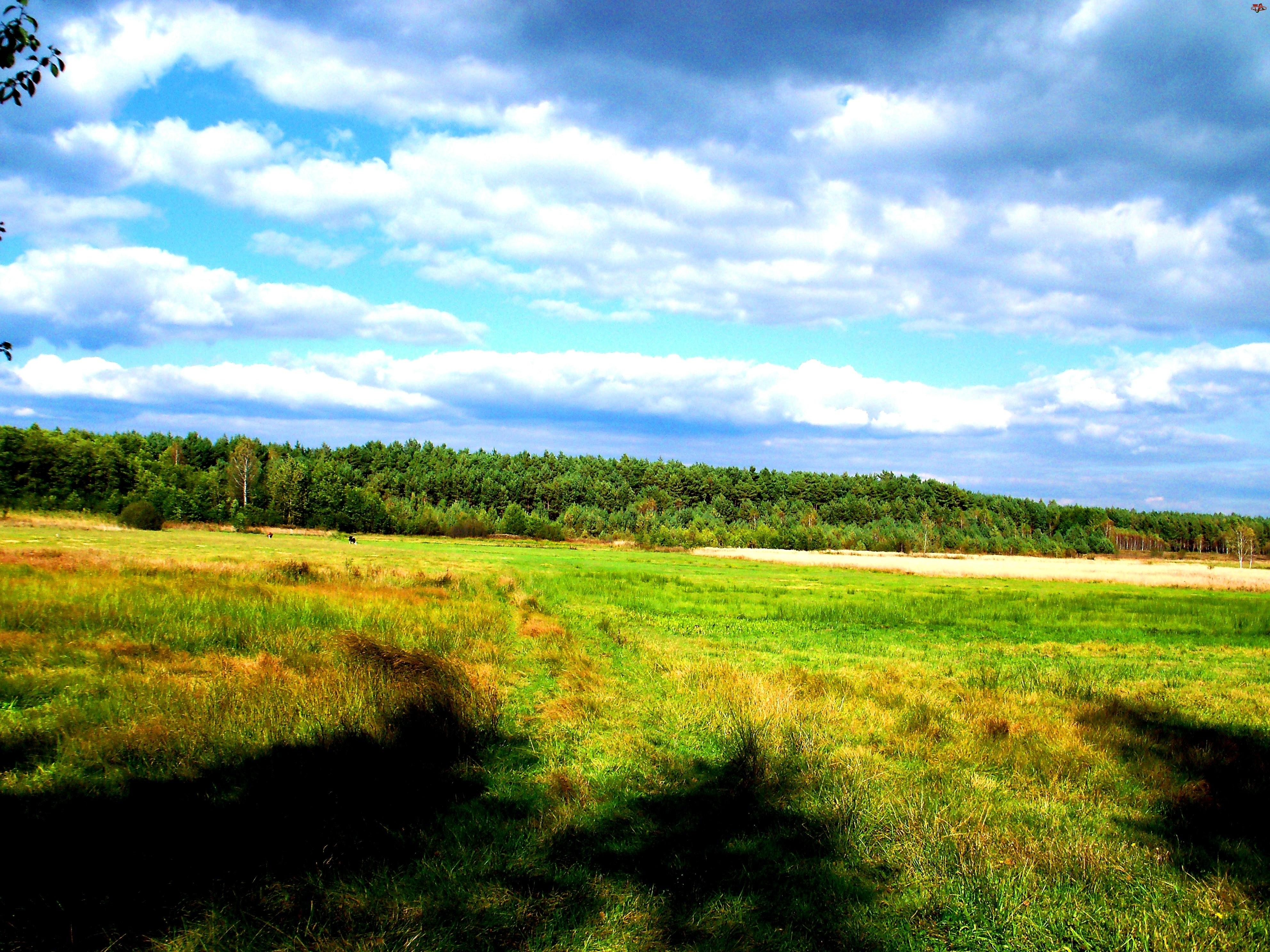 Łąka, Cienie, Drzew