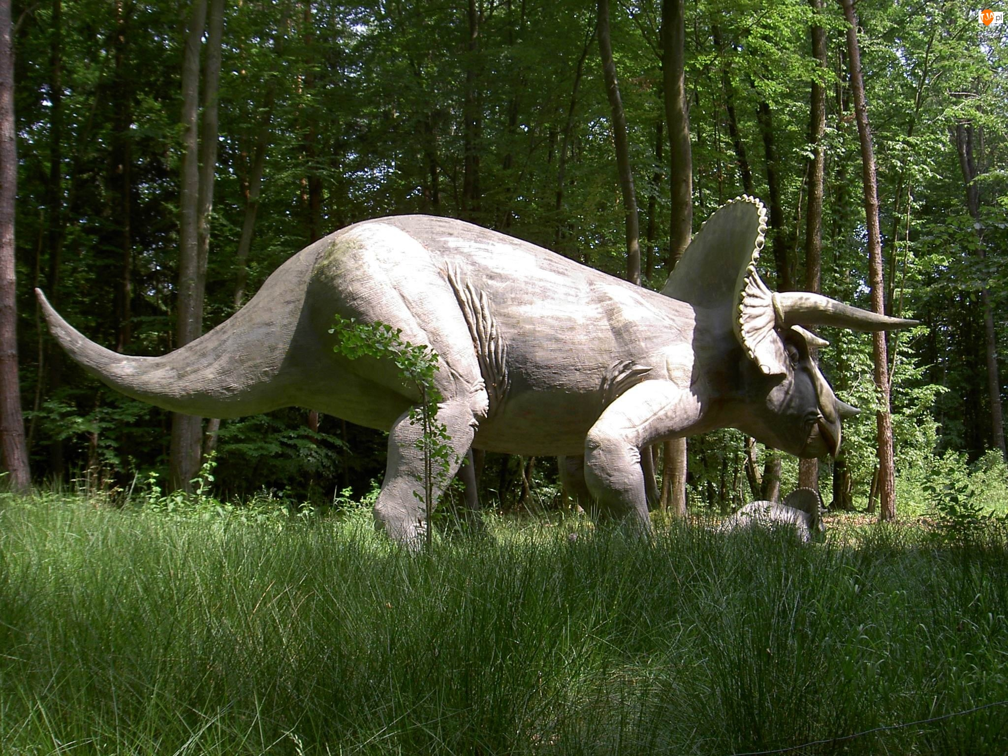 Trawa, Triceratops, Las