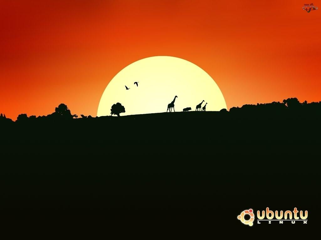 krąg, afryka, Ubuntu, słońce, ludzie, symbol