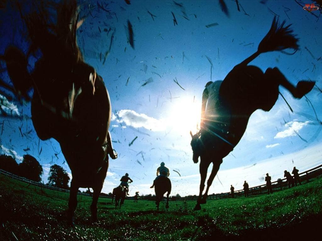 dżokej, Konie, wyścig