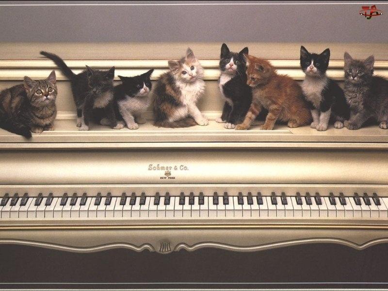 Koty, Pianino