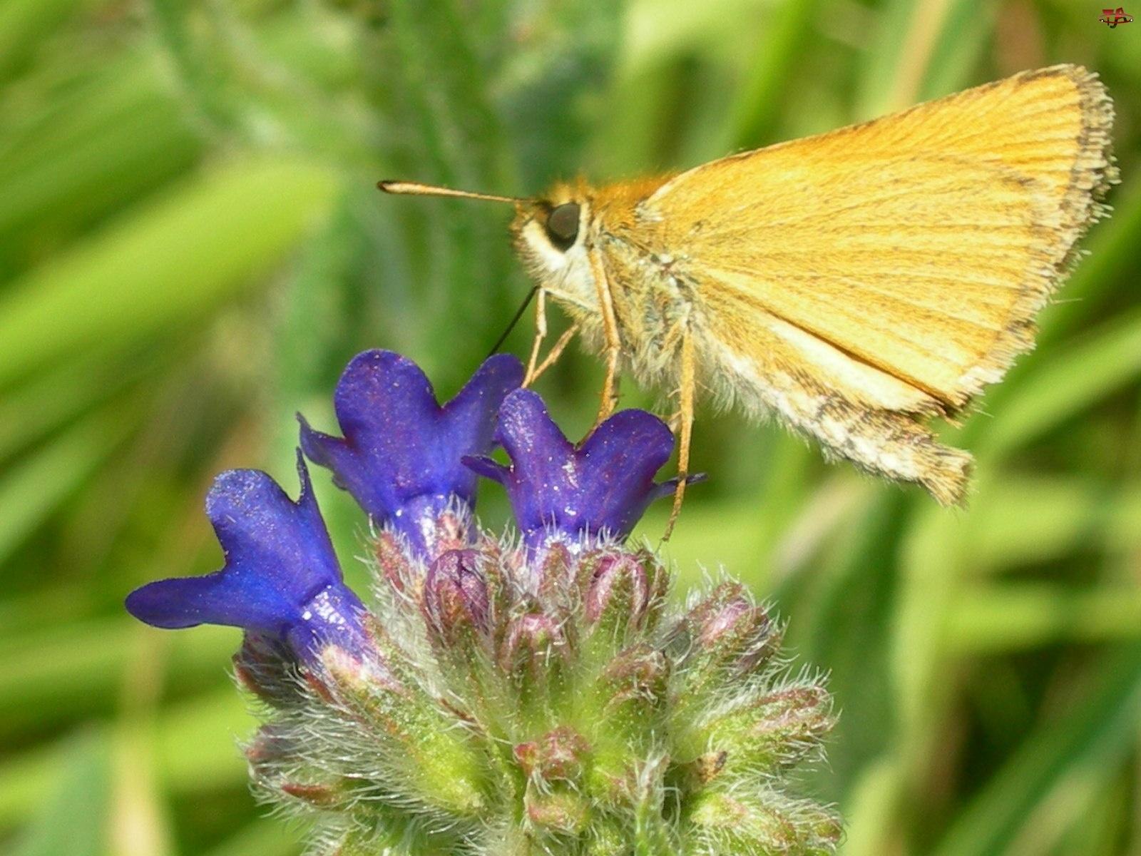 Kwiat, Karlątek, Żółty, Motyl
