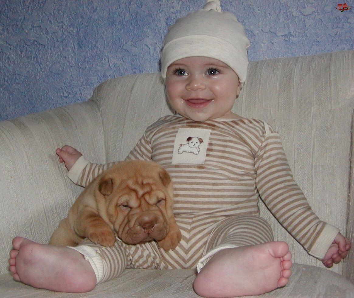 dziecko, słodki, Shar Pei, szczeniak, zadowolone
