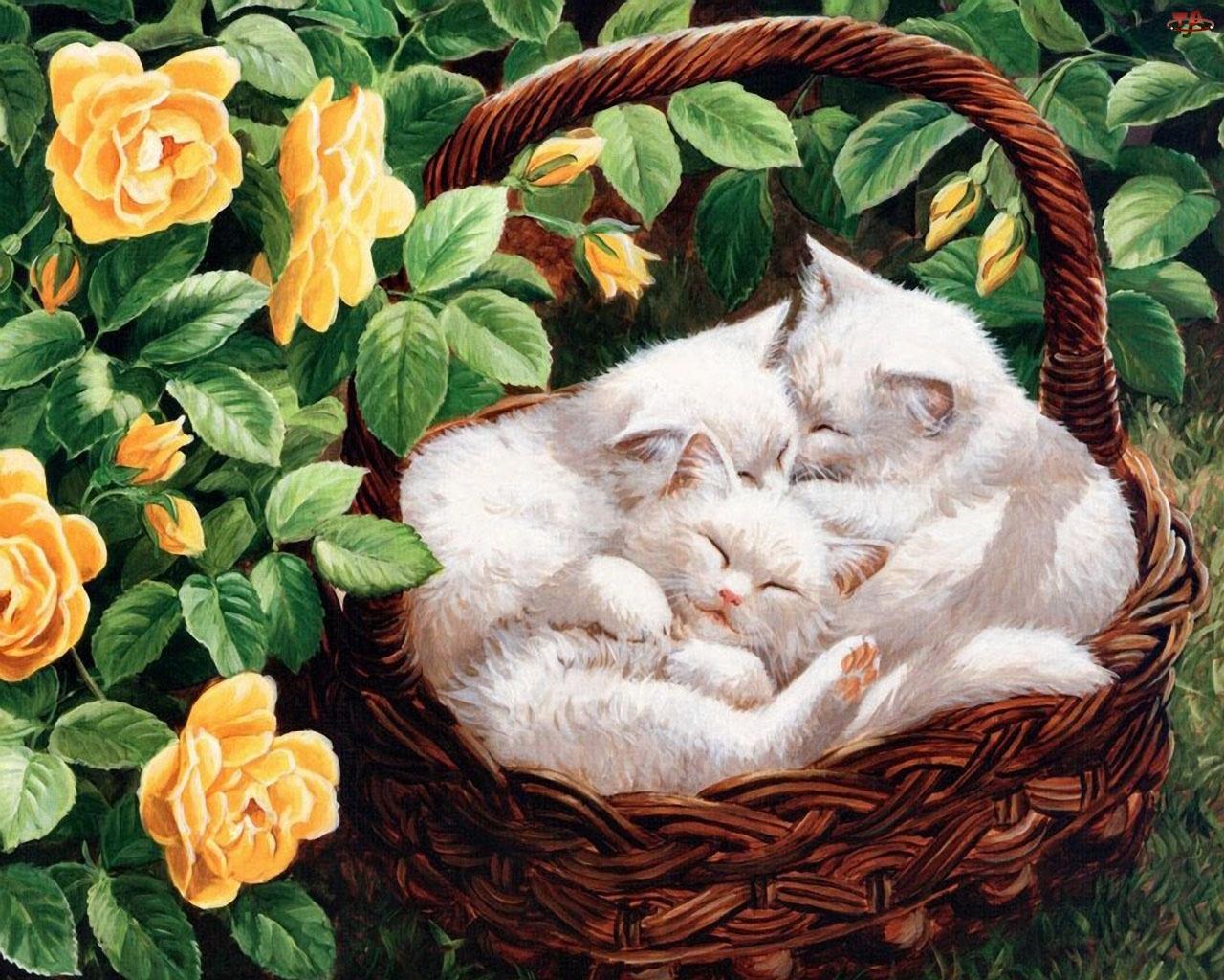 Białe, Koszyku, Kotki, W