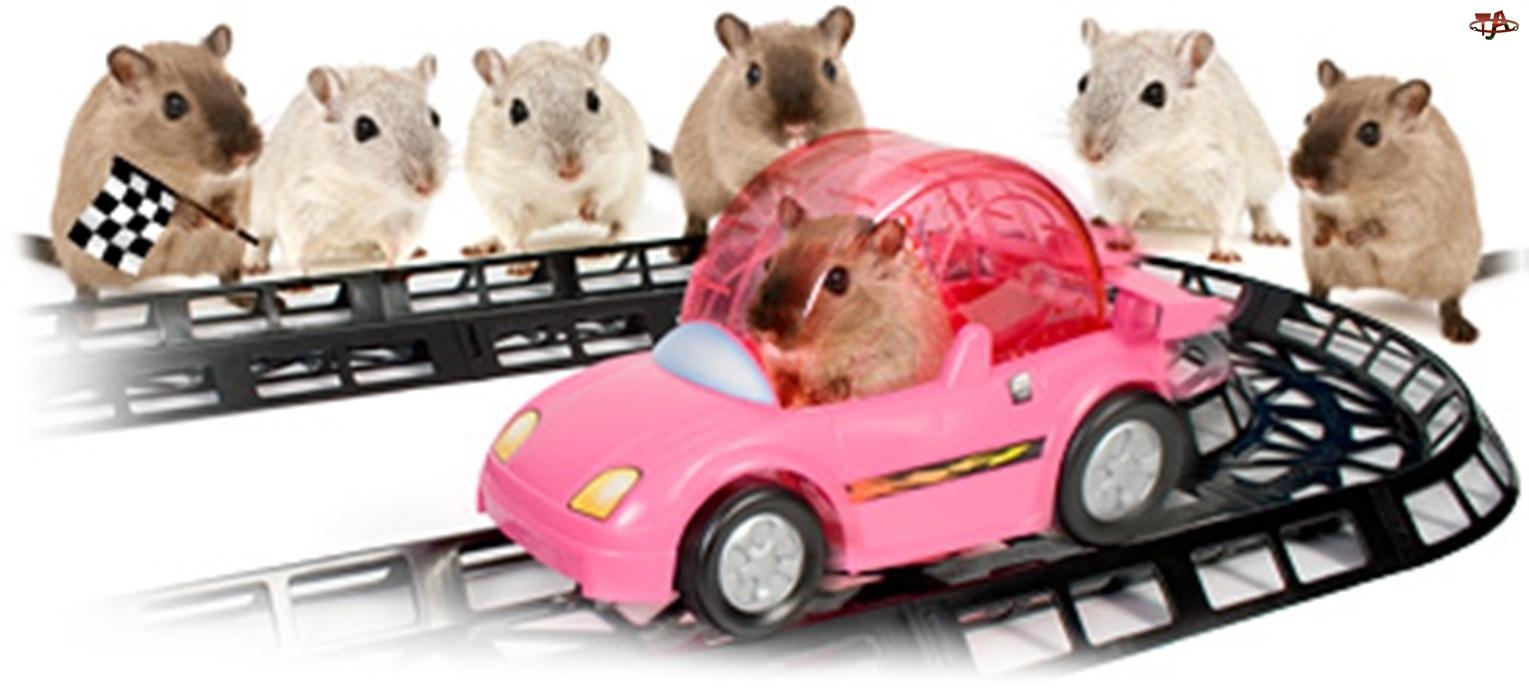 suwaki, Wyścigi, Samochodowe