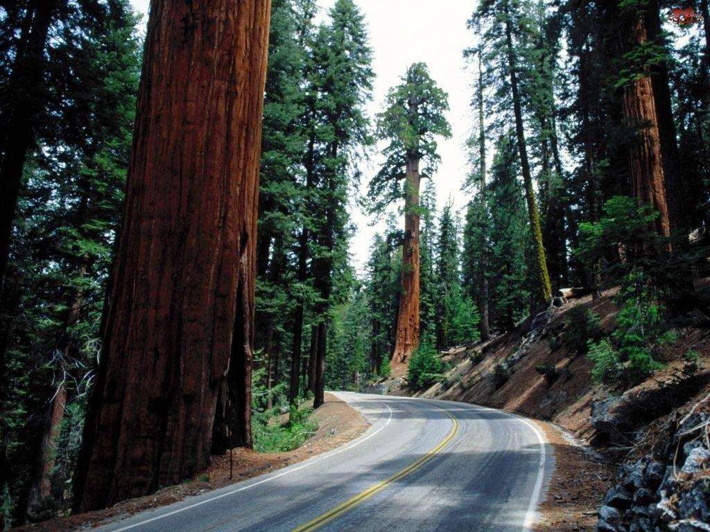 Ulica, Drzewa