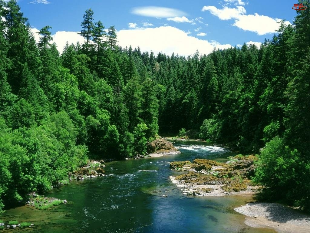 Leśna, Rzeka