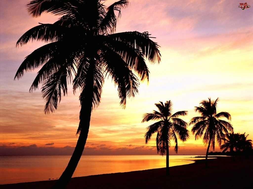 Jezioro, Palmy, Zachód Słońca