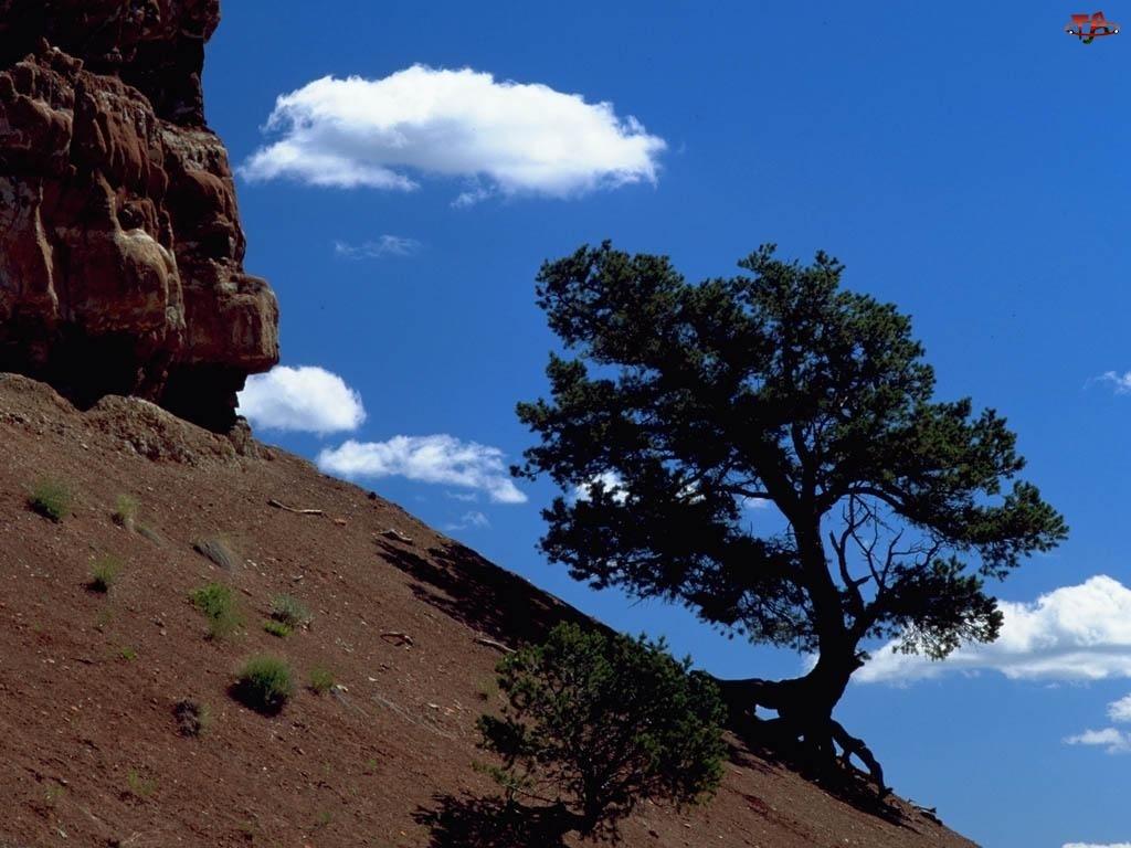 Góra, skarpa, Drzewa, Niebo