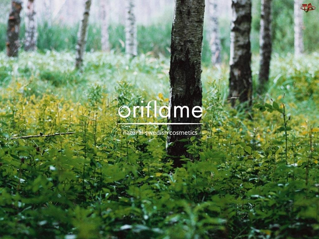 natura, Oriflame, brzoza, drzewo, las