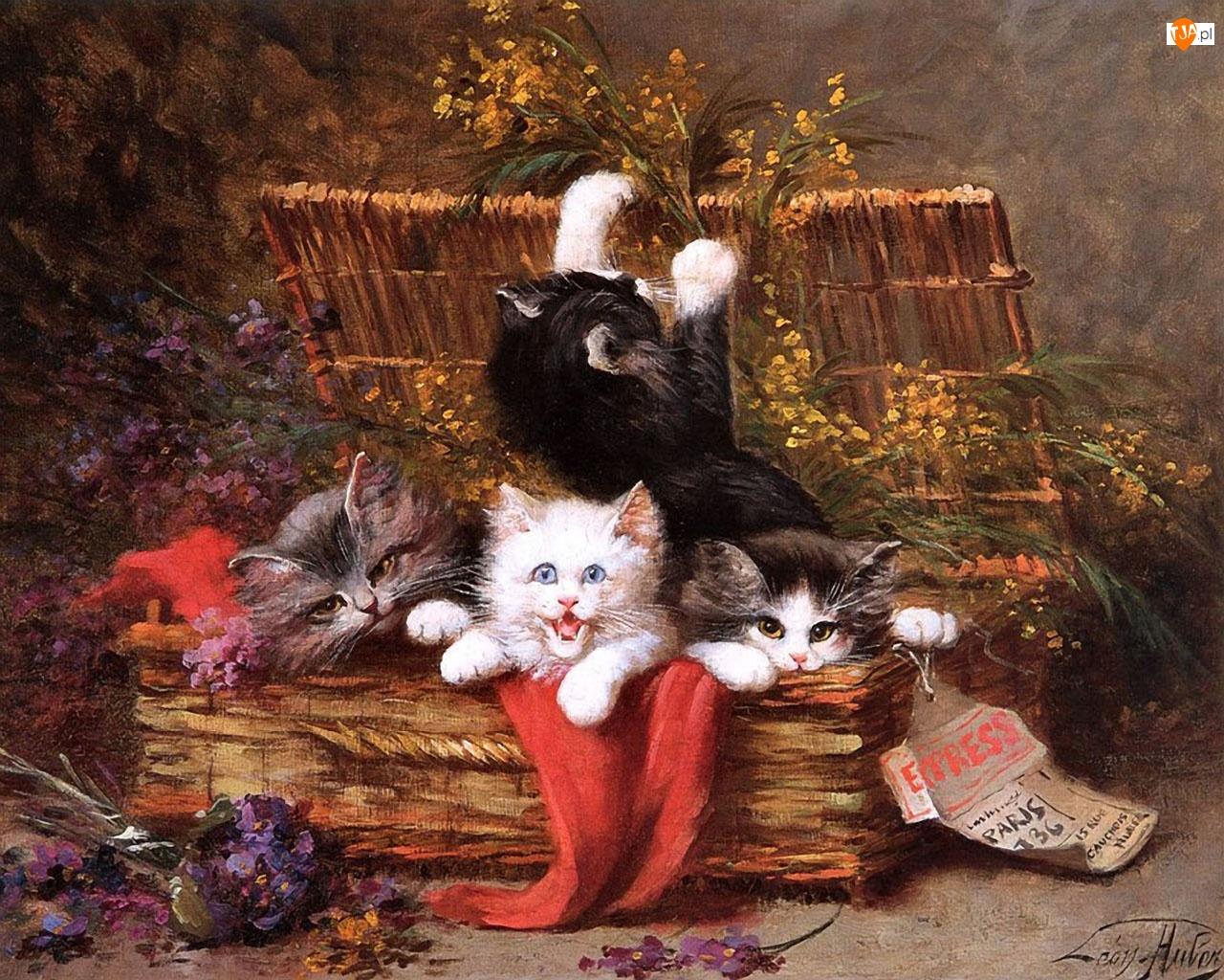 Kwiaty, Kotki, Koszyki