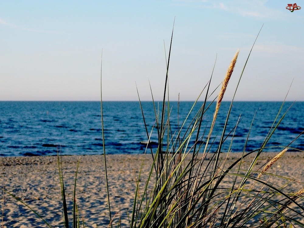 Liście, Plaża, Trzcina