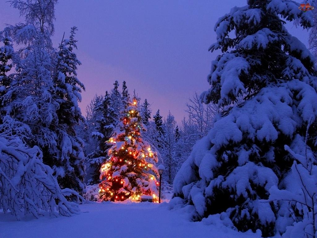 Choinka, Zima, Las, Boże Narodzenie