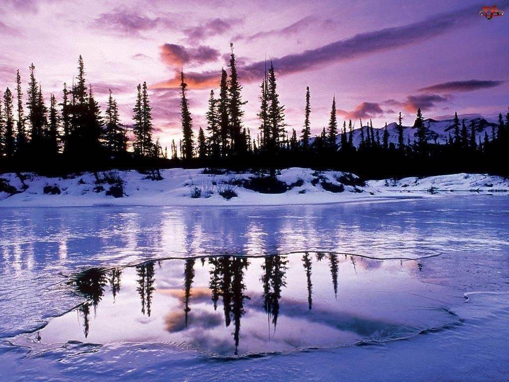 Zamarznięte Jezioro, Zima, Las