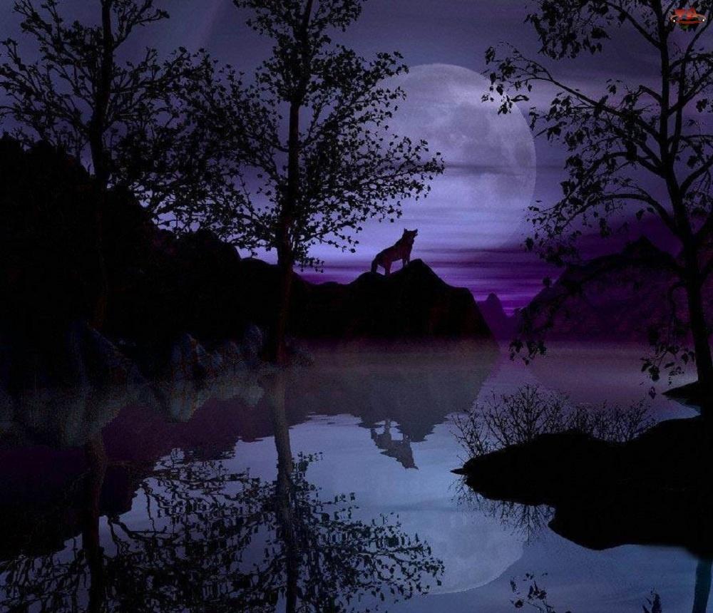 Wilk, Noc, Las, Rzeka