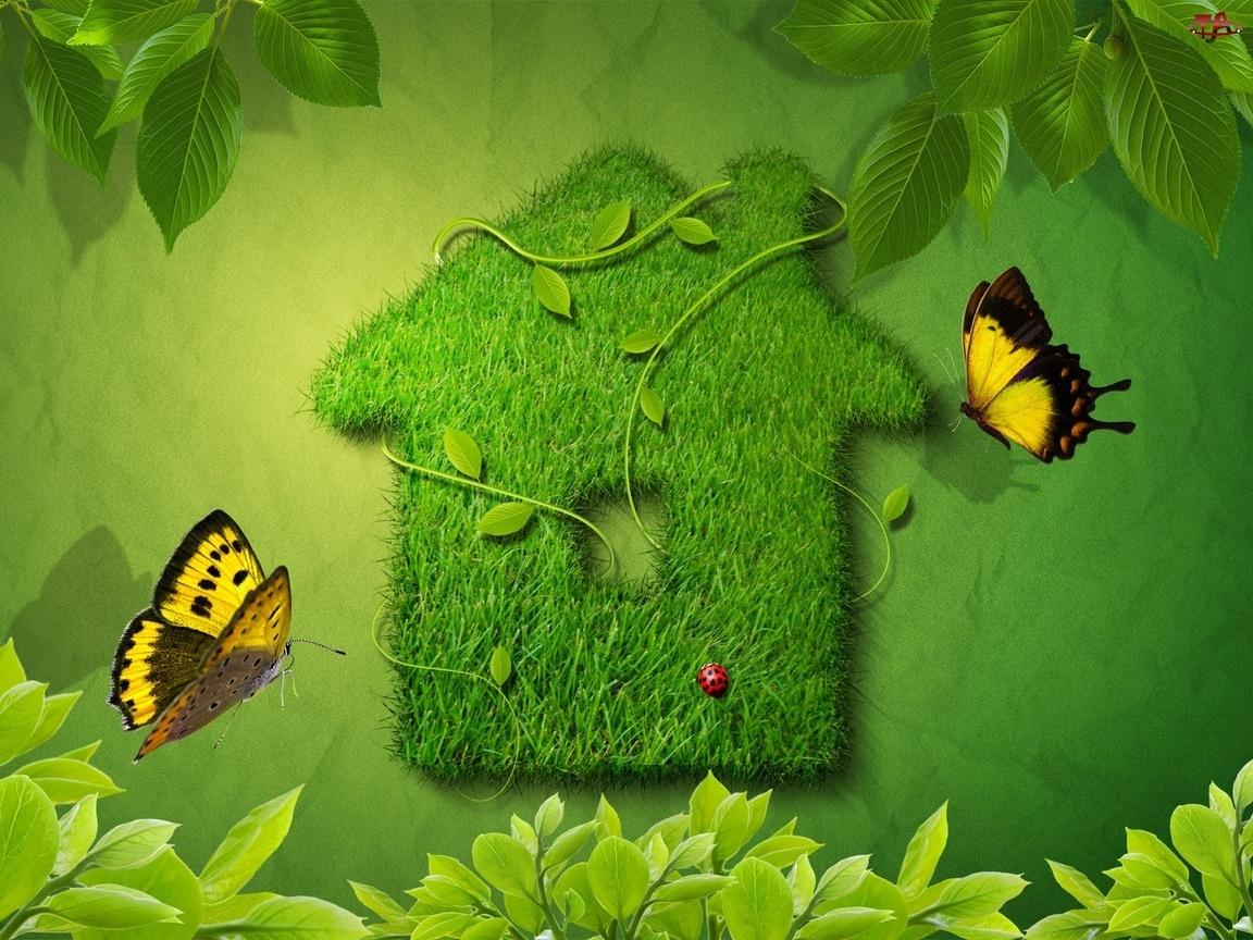 Zielony, Motyle, Domek, Trawa
