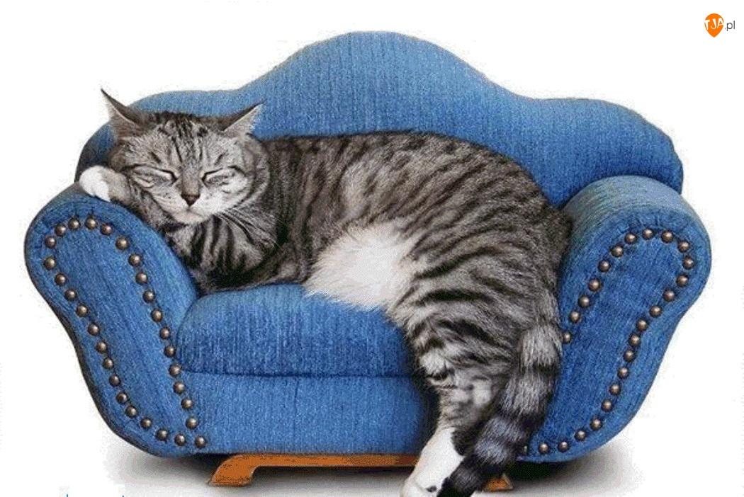 Fotel, Duży, Kot