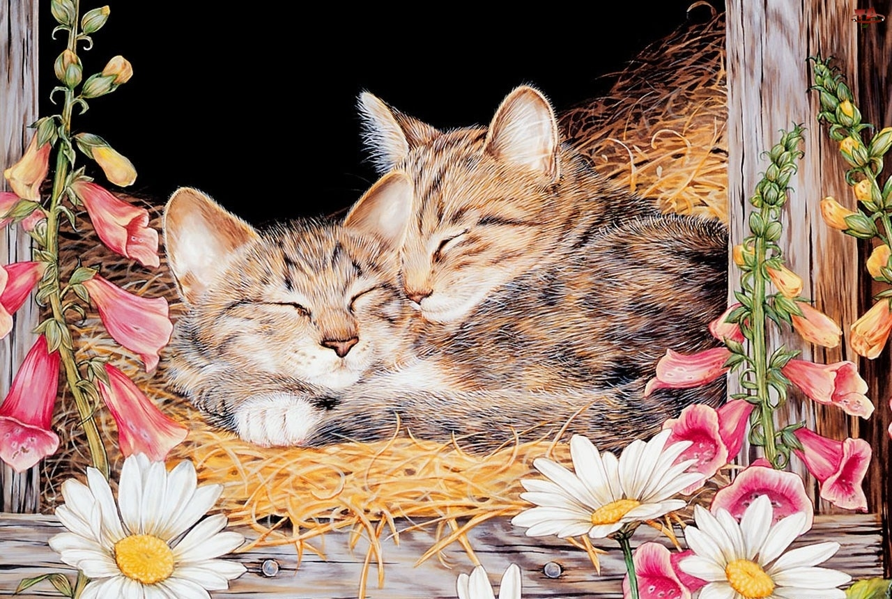 Siano, Śpiące, Kotki
