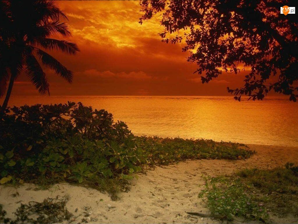 Plaża, Roślinność, Zachód, Słońca