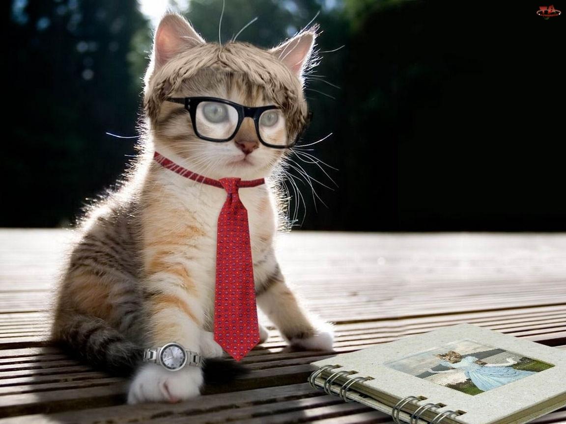Kot, Biznesmen