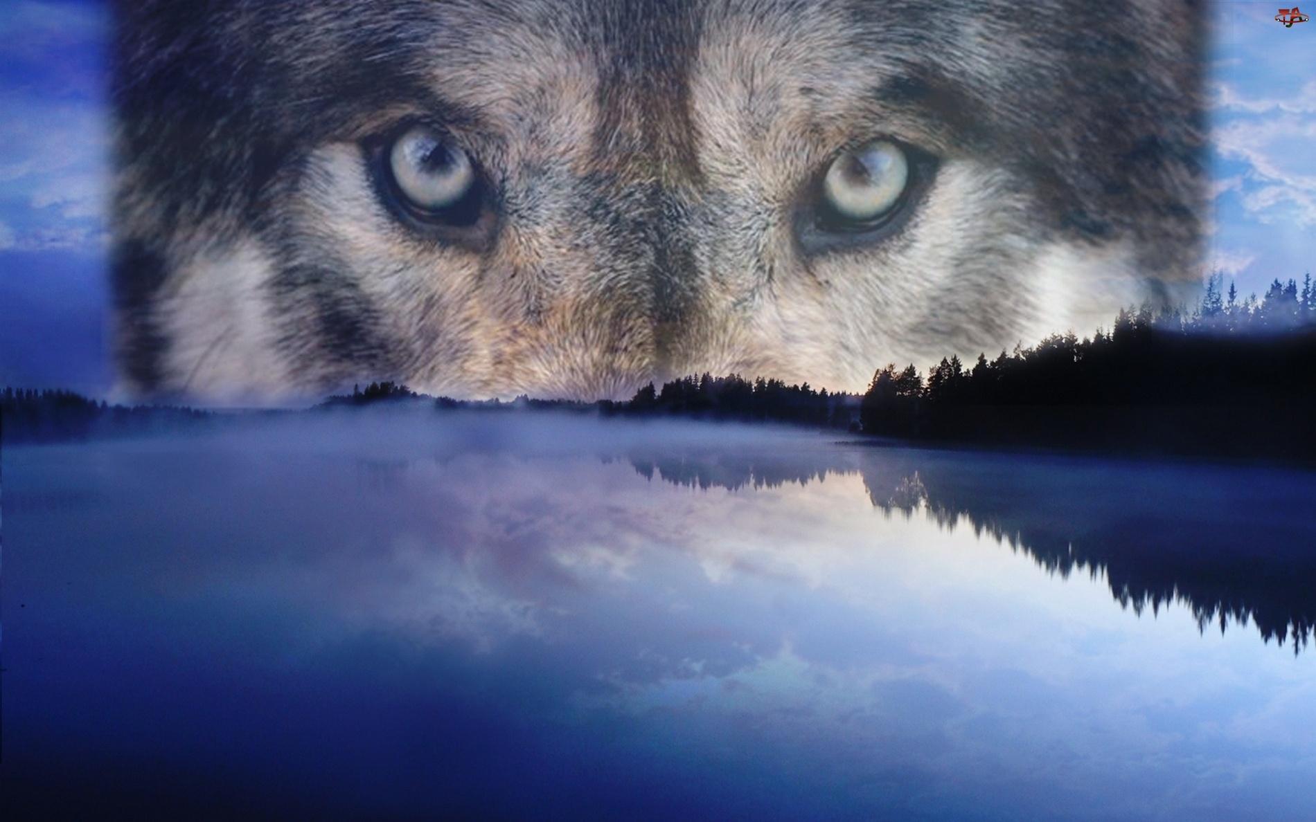 Jezioro, Oczy, Wilka