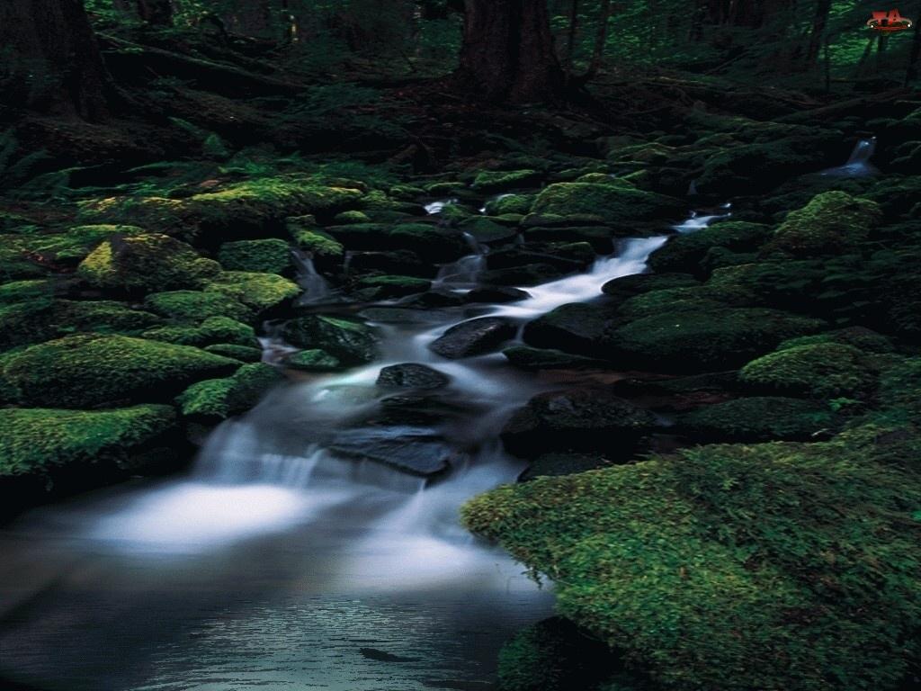 Rzeka, Kamienie