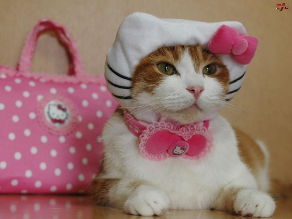 Kitty, Kotek, Hello