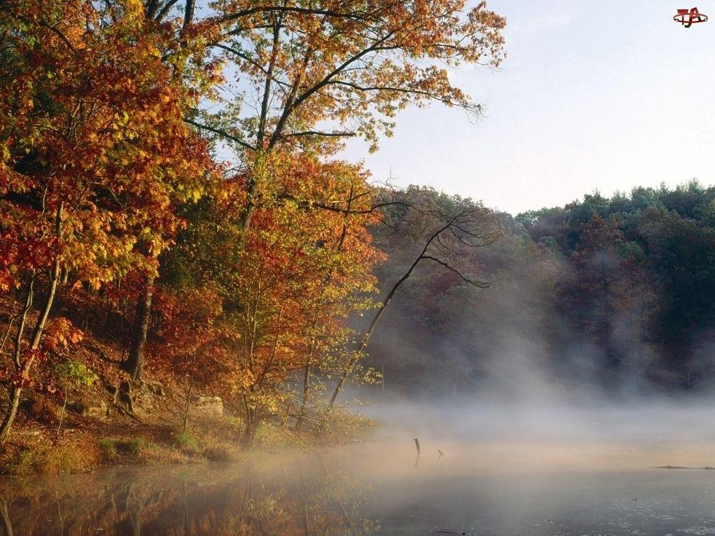 Drzewa, Jesień, Las