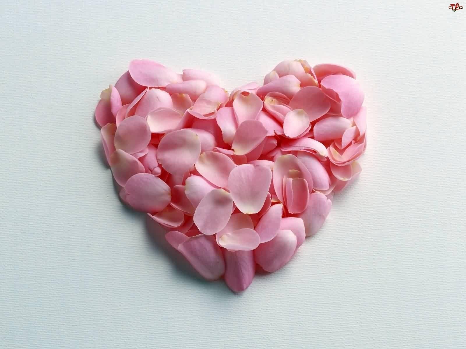 Walentynki, Róż, Serce, Płatki