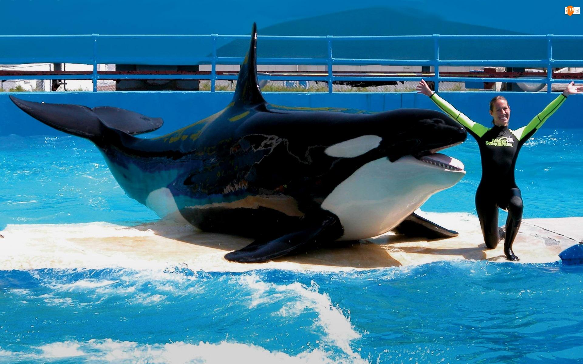 Orka, Akwarium, Miami, Morskie, Floryda