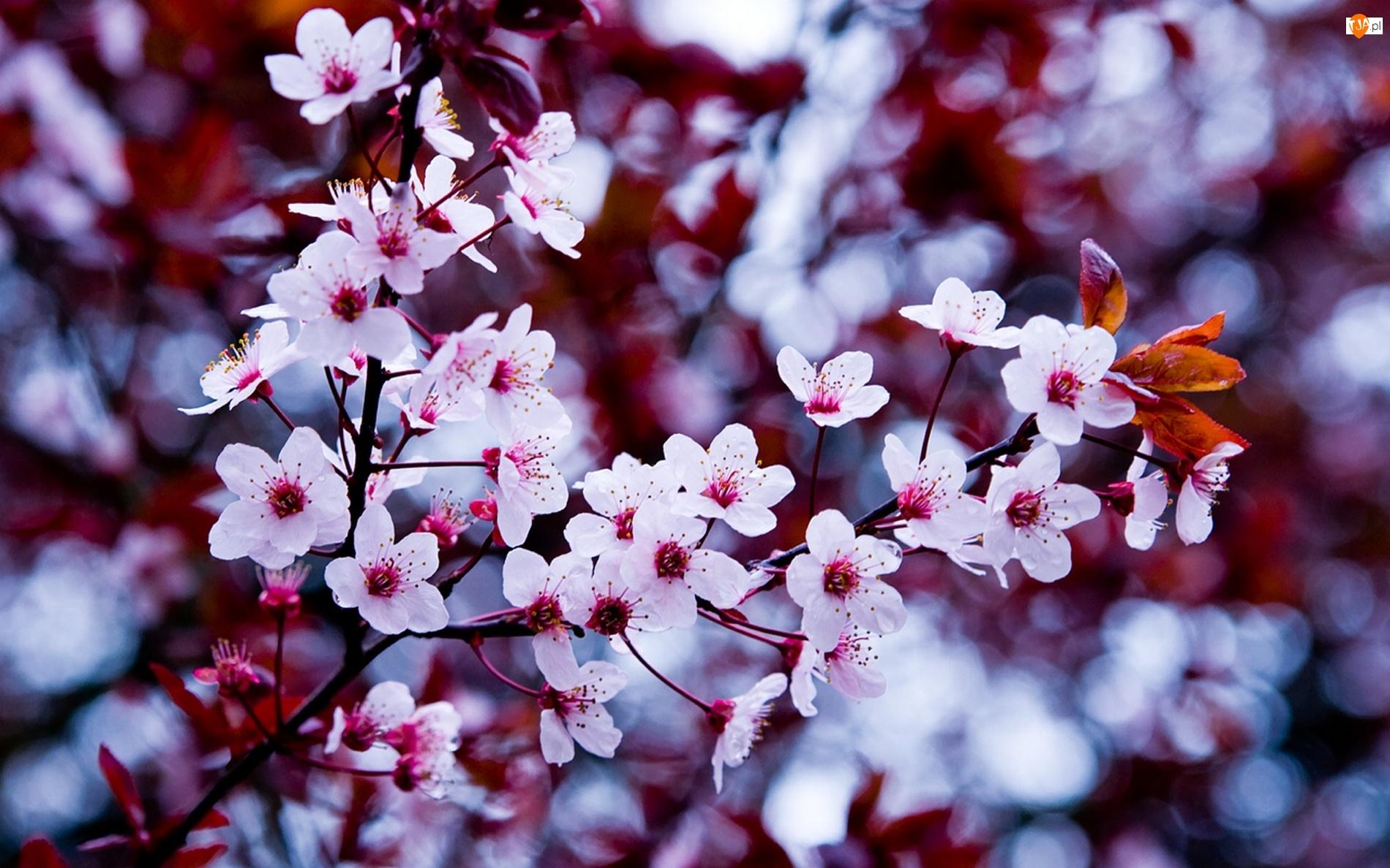 Kwiatuszki, Drzewo, Owocowe