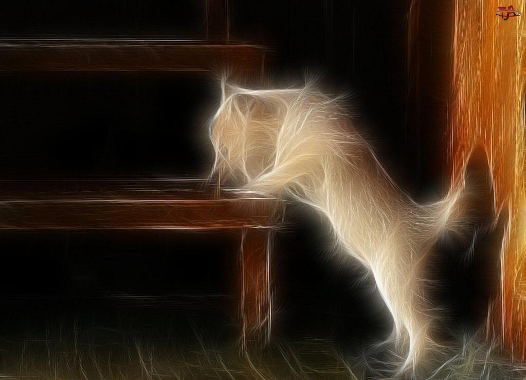 Grafika, Kot, Ławka