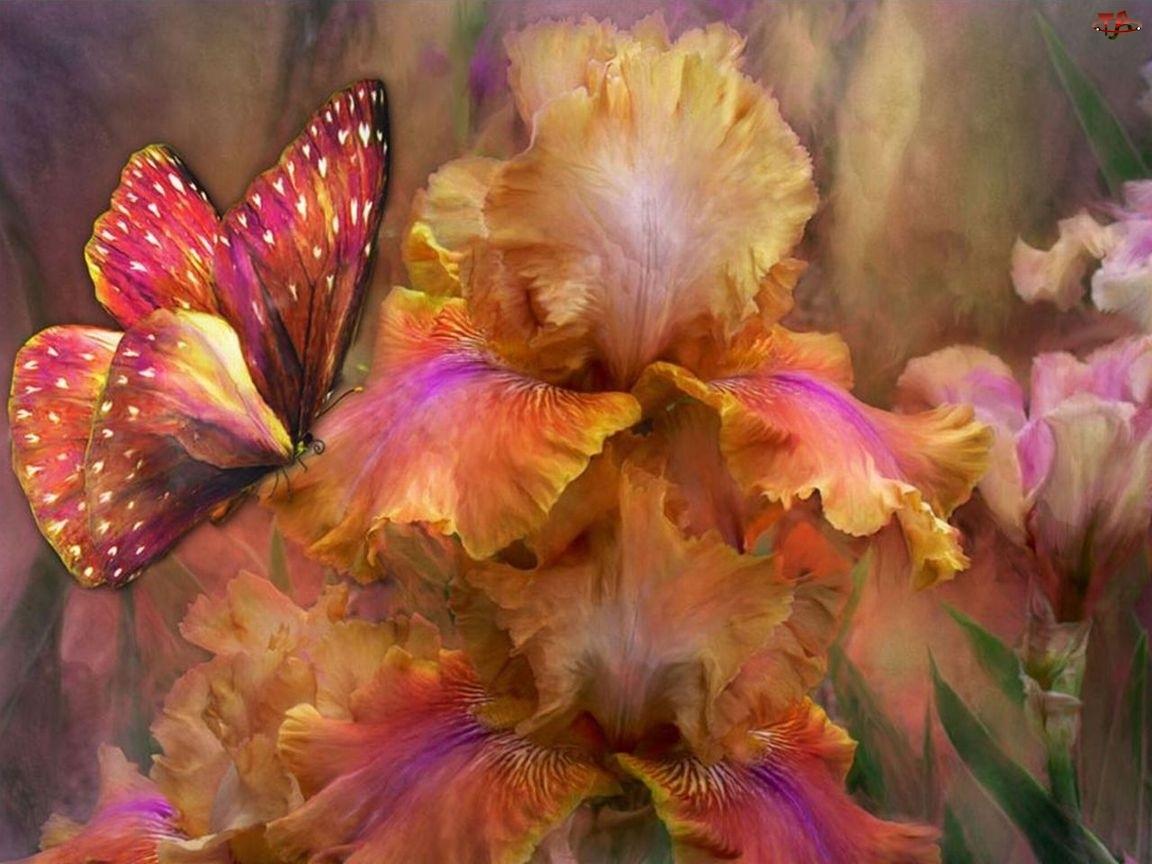 Motyl, Kwiaty, Kolorowy