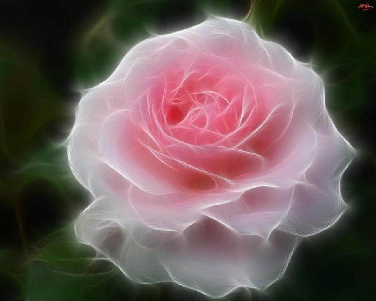 3D, Różowa, Róża