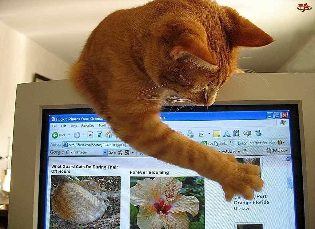 Komputerze, Kot, Przy