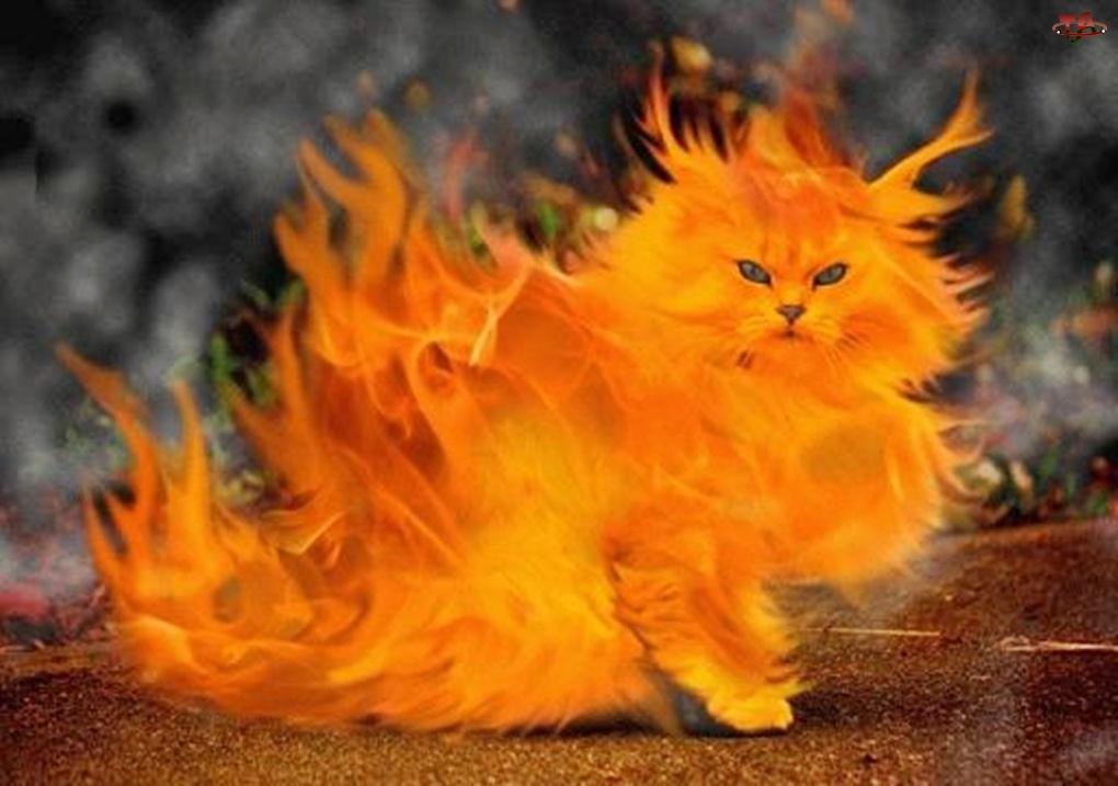 Płonący, Kot