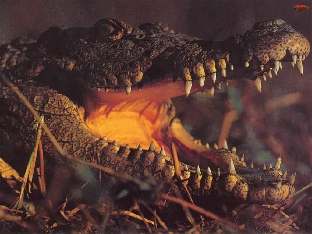 Paszcza, Krokodyla